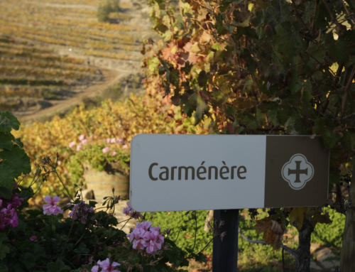 "Carmenere: ""Sorry France, I hear South America Calling"""