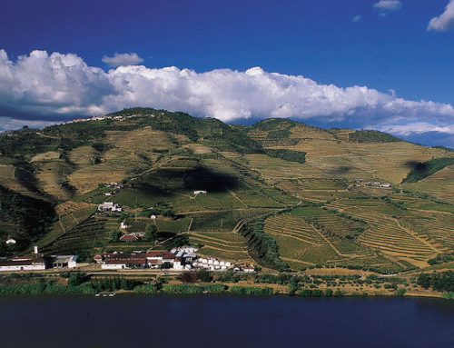 Tradition vs. Innovation: What Will Save the Douro? Part I