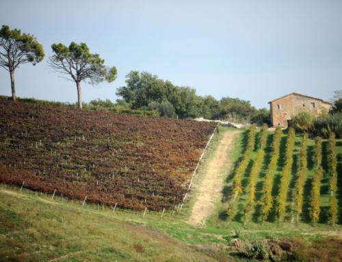 Wine Review: 2010 Saladini Pilastri Rosso Sangiovese