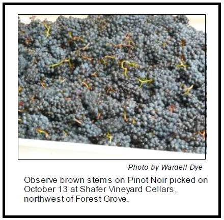 Brown Stems and Seeds on Pinot Noir