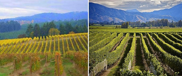 Tale of Two Pinots - Oregon and New Zealand