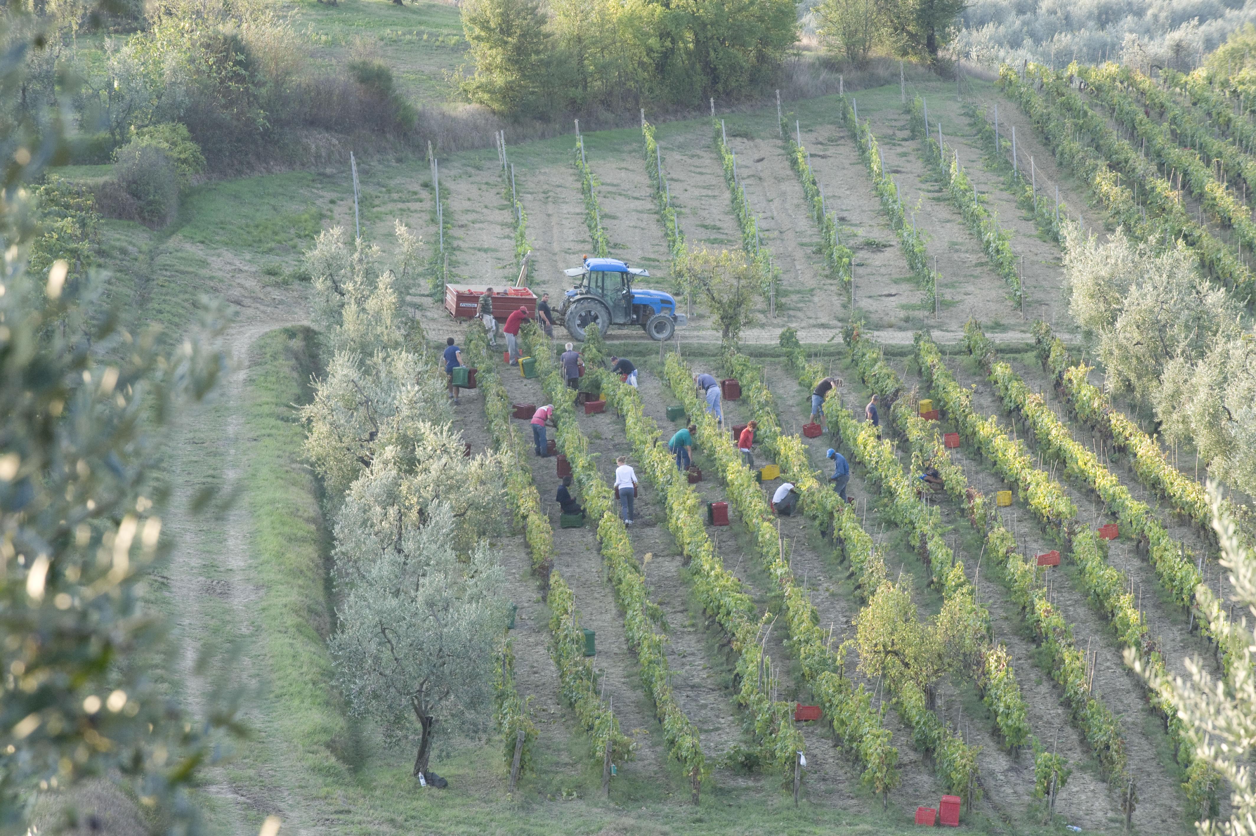 Poggiotando Toscana