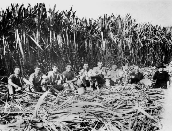 Italian sugar cane cutters Innisfail District Queensland 1923