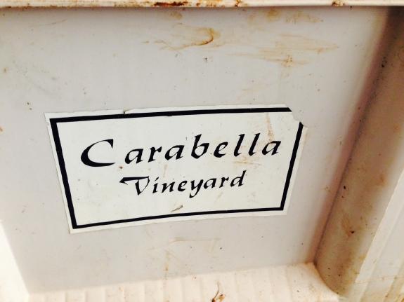 Carabella Vineyard Pinot noir