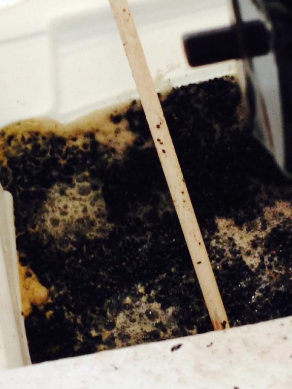 pinot fermenting
