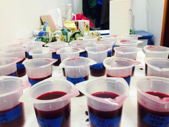 wine ferment samples