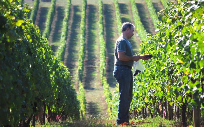 Oregon Winemaker Tony Rynders