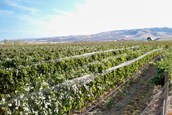 Walla Walla Valley Wineries Pouring in Portland