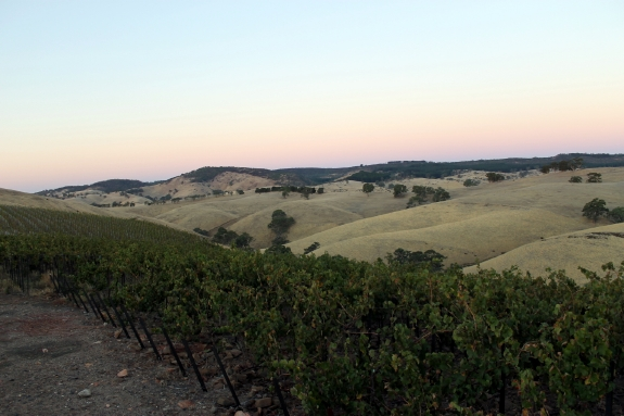 Australian Wine Country