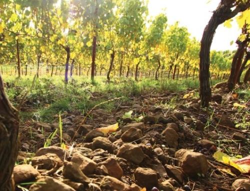 2011 Rex Hill Dijon Clone Chardonnay