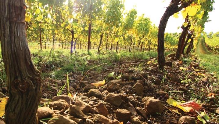 Rex Hill Vineyards