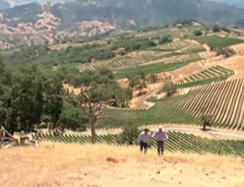 Video: Wines of California