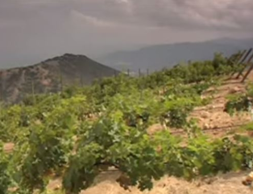 Video: The Wines of Chile