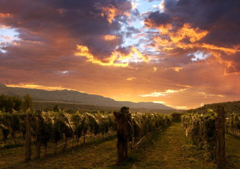 Sutcliffe Vineyards