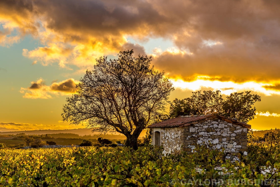 Le Mazet in the vineyards of Languedoc