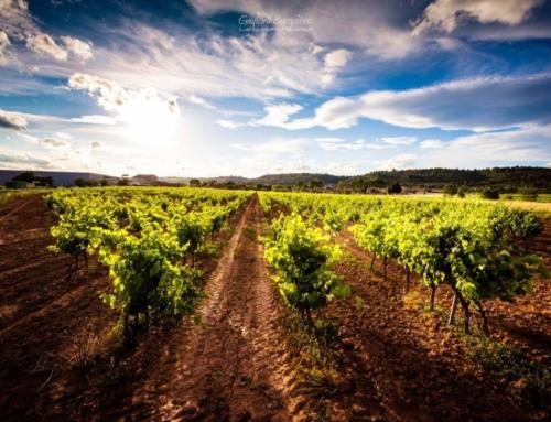 Wine Photo: Village of Cébazan Vineyards, AOC Saint-Chinian