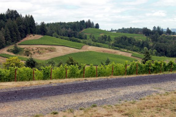 Gran Moraine vineyards