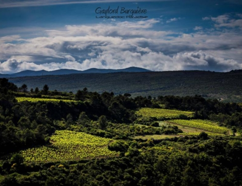Wine Photo of the Week: Languedoc