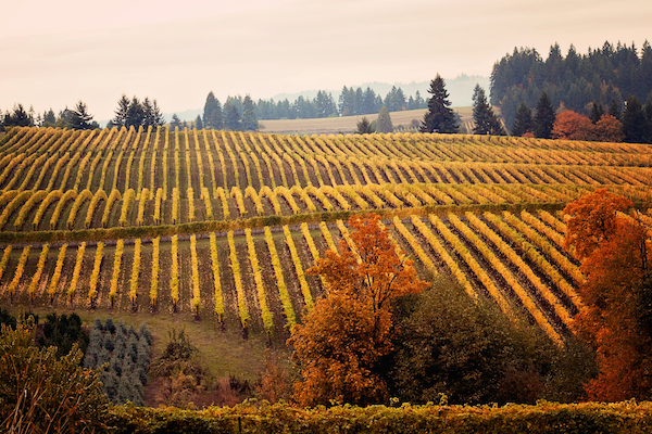 Willamette Valley thanksgiving