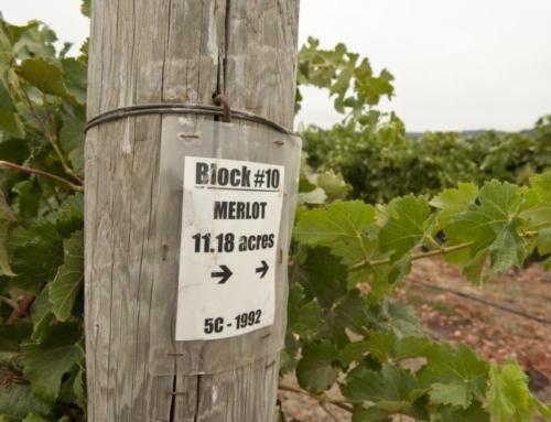 2014 Markham Vineyards Merlot: Soft & Seductive