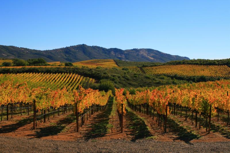 Miner Stagecoach Vineyard