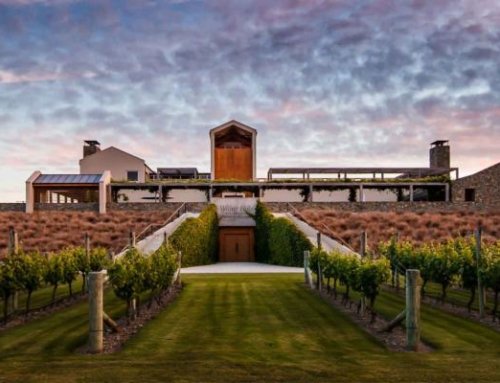 Feisty and Complex: 2015 Wither Hills Sauvignon Blanc