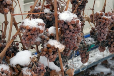 Koenig Vineyards Botrytis
