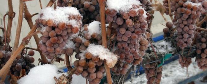 Koenig Vineyards Botrytis