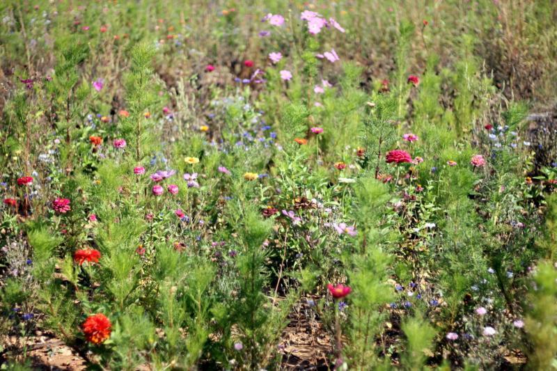 Chateau de l'Escarelle flowers
