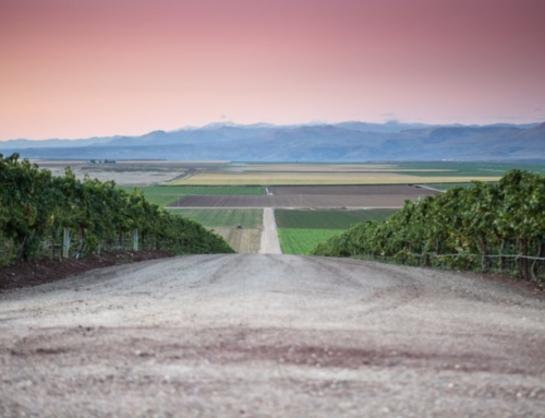 A Delicious Lineup of Idaho Wines