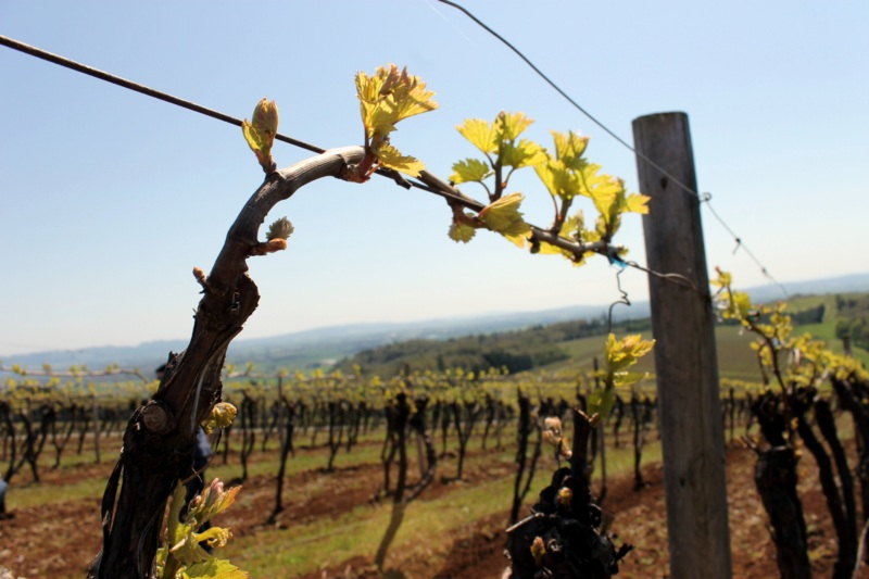 Willamette Valley Wine Events