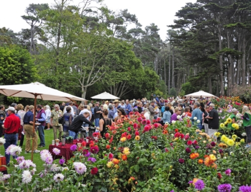 Winesong: Mendocino's Premier Food & Wine Event