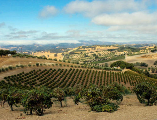Paso Robles: A World-class Winegrowing Desination
