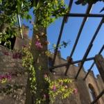 Lemon Garden in Torri del Benaco.